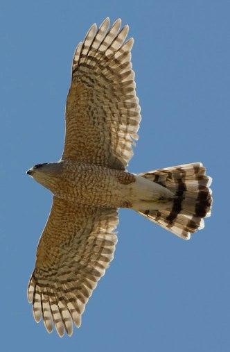 Norwegian Ridge Birding and Nature Trails - Spring Grove, MN   332 x 507 jpeg 36kB